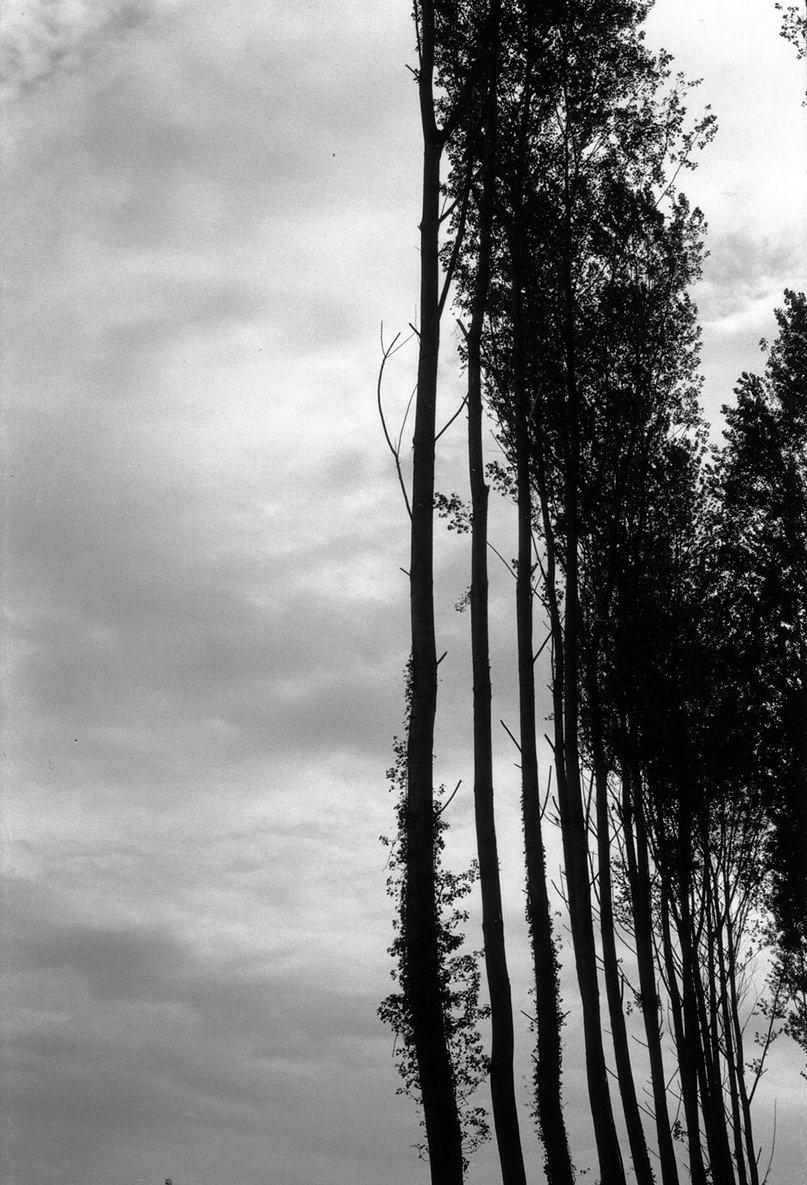 32Rideau-d-arbres-1