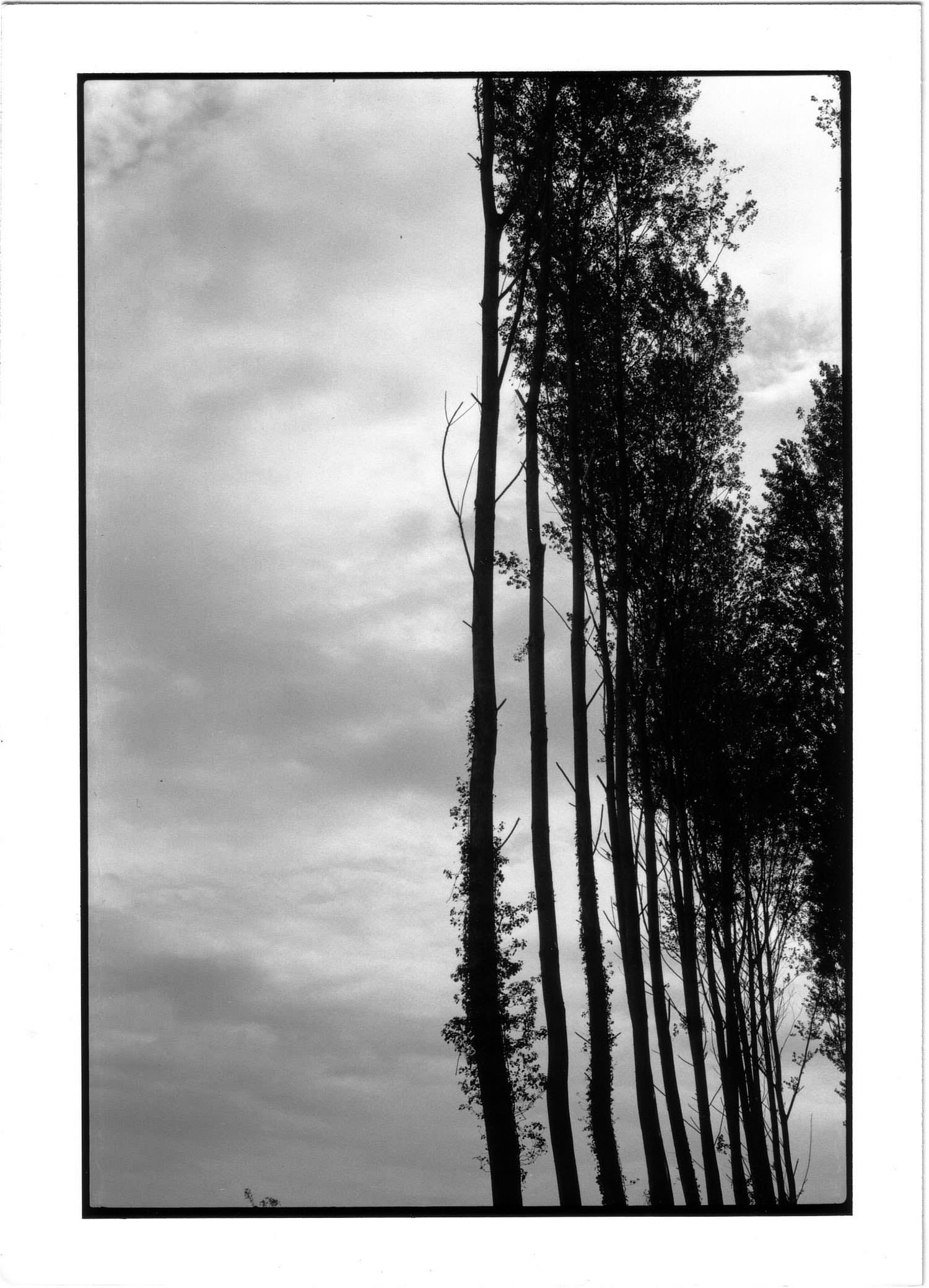 Rideau d arbres