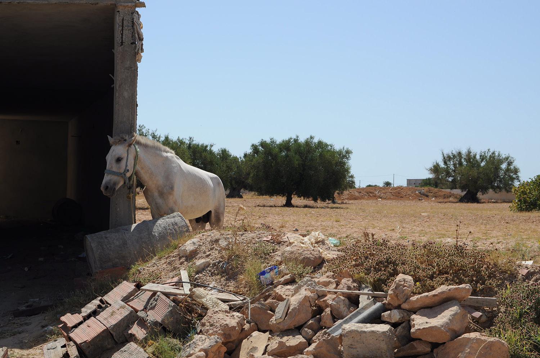 Djerba Route 4